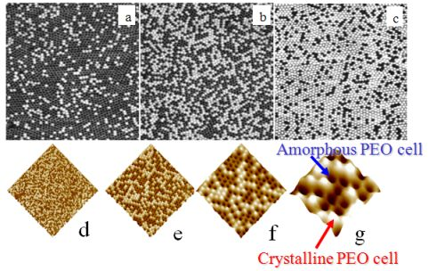 afm phase images